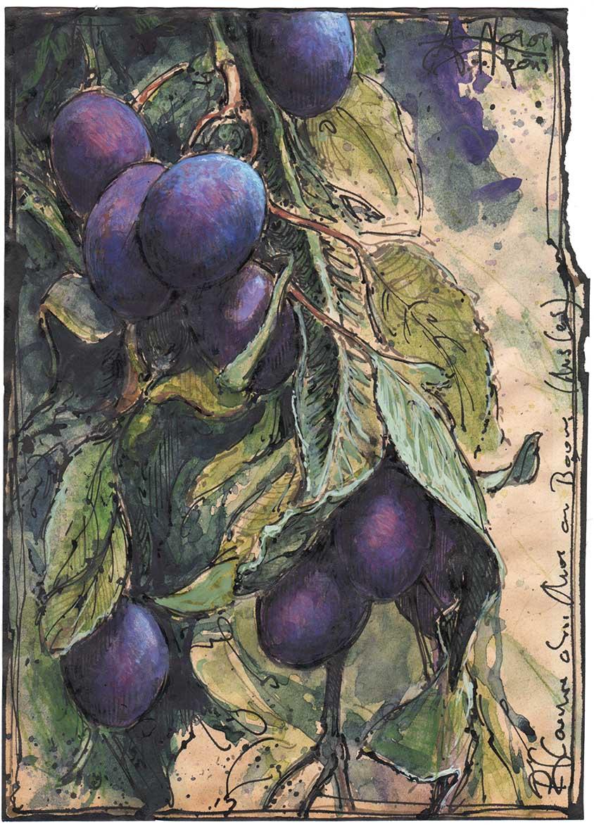 Pflaumen ohne Mus am Baum (Muslos)