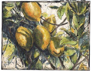 Im Land der Zitronen und Pomeranzen