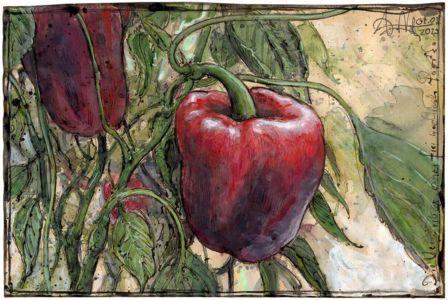 Die Verwirrung einer frei wachsenden Paprika