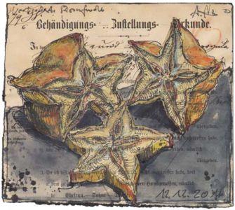 Getrocknete Sternfrucht
