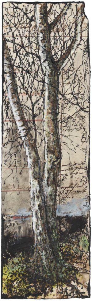 Birken im sich wandelden Dunkel